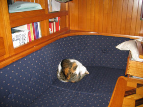 Jill, the ship's cat