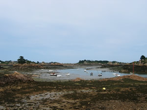 barnacle-paimp