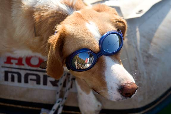 I don't know who is madder: the dog with the goggles or the German woman rowing him around the bay!