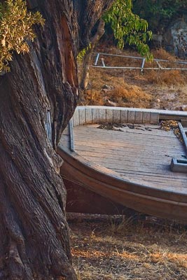 A tree and a boat. You'd never have guessed.