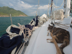 Millie reminds us to sort out that bloody headsail