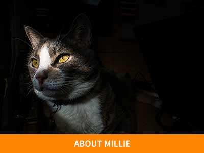 About Milie